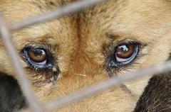 За жестокое обращение с животными - за решетку! Новый закон вступил в силу