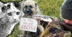 Украинцев ждут штрафы за жестокое обращение с животными