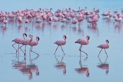 Впервые в Украине появилась стая розовых фламинго