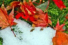 Заморозки, дожди и бабье лето: кому повезет в эти выходные