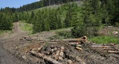 Преступление экономически и экологически: на Закарпатье хотят вырубить 14000 га леса
