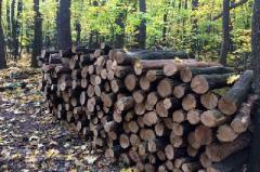 Полицейские остановили незаконную вырубку деревьев в Великоанадольском лесу