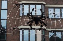 Ученые выяснили главную причину боязни пауков