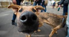 Из-за нового законопроекта на улицах снова появится множество бездомных котов и собак