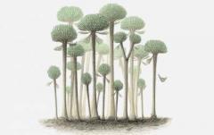Палеонтологи обнаружили останки древнейших деревьев-грибов