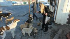 Новые законы о животных: прогулка с собакой – только для взрослых