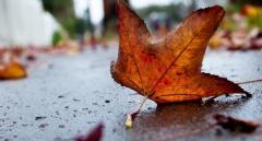 Дожди уходят: синоптики порадовали солнечным прогнозом погоды на выходные