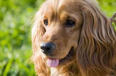 Новый закон о домашних животных: оштрафуют на 20 тысяч гривен