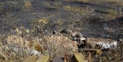 В зоне АТО боевики 10 раз нарушали перемирие