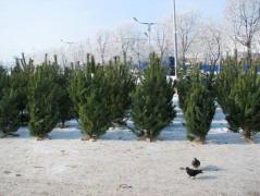 Донецк завалят елками