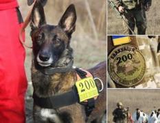 В зоне АТО тела погибших ищет уникальная собака