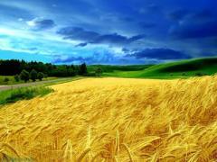 Что принесет общинам контроль над землей?