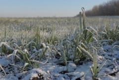 Завтра, 23 февраля, ночью до 20 градусов мороза. Народные приметы