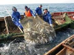 Украина и Россия договорились, как делить улов рыбы в Азовском море