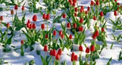 Стало известно, когда в Украине начнется интенсивное потепление