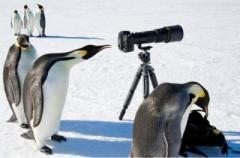 В Антарктиде пингвины стащили оборудование на украинской станции