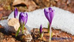 Синоптик сказала, когда в Украину наконец придет весна