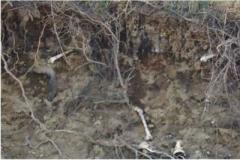В Нью-Йорке обнаружили сотню человеческих костей