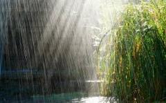 Сегодня на Донетчине будут дождь и гроза