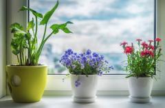 Комнатные растения по фен-шуй: цветы семейного счастья