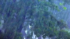 Погода на сегодня: дожди и грозы