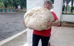 На Киевщине нашли гриб весом почти 18 килограмм