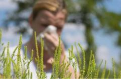 Аллергикам на заметку: чего стоит опасаться в августе