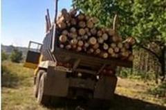 В Макеевке массово пилят деревья. Люди возмущены