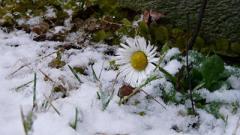 Мягкие зимы без сильных морозов прогнозируют Украине метеорологи