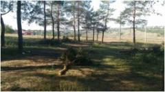 В Донецке и Макеевке пилят деревья в городских парках