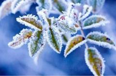 Теплые дни закончились: стало известно, когда в Украине выпадет снег и придут морозы