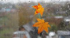 Мокрый снег, сильный ветер и ощутимое похолодание: синоптик рассказала, какой будет погода на следующей недели