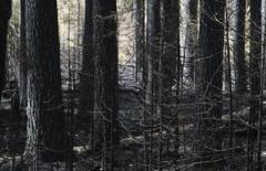 Донбасс на пороге экологической катастрофы, – ООН