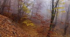 Туман накроет всю Украину, - синоптик уточнила прогноз