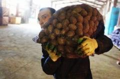 В Донецке оккупационные «власти ДНР» эксплуатируют детей на разгрузке картошки «на выборы»