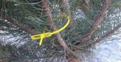 Новый год приближается: где выгодно купить елку