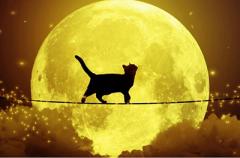 Как сделать перебежавшую дорогу чёрную кошку символом удачи