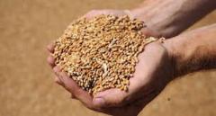 Главари «ДНР» вывезли урожай зерновых в Россию