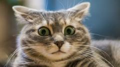 Женщина украла у кота подстилку