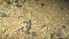 В «ЛНР» безнадежно испорчено более 400 тонн пшеницы