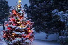 Когда и как принято убирать новогоднюю елку: приметы и традиции