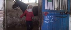 В конно-спортивной школе в «ДНР» лошади голодают и спят на отходах подсолнечника