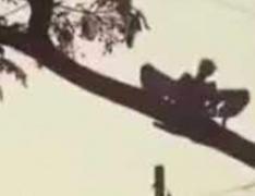 Очевидцы засняли странное существо в Никарагуа