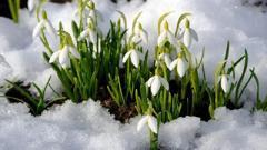 Весна придет не быстро: синоптик рассказал о предстоящих заморозках и мокром снеге