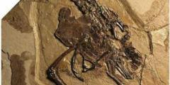 Палеонтологи нашли древнюю птицу с «сюрпризом»