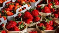 Ранние овощи, фрукты и ягоды: ценовой прогноз