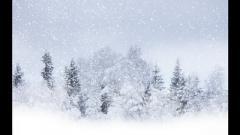 Метель обрушилась на Украину в середине апреля: все замело снегом