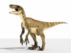 В Тбилиси камера наблюдения засняла живого динозавра (ВИДЕО)
