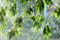 Дожди до конца месяца синоптики рассказали о погоде в Украине