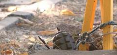 В «ДНР» ребенок принес домой гранату и патроны
